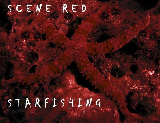 Scene Red - Starfishing album cover